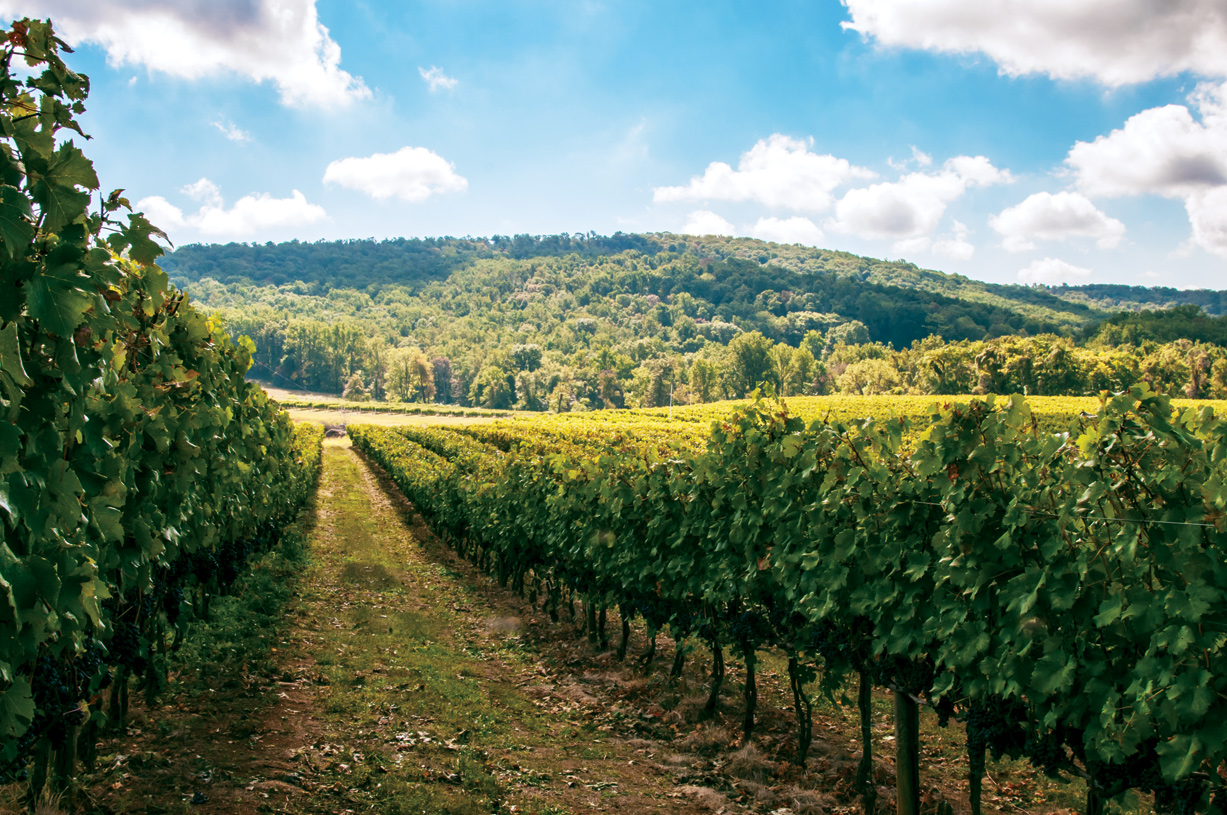 Sample Virginia's finest wines at nearby award-winning wineries