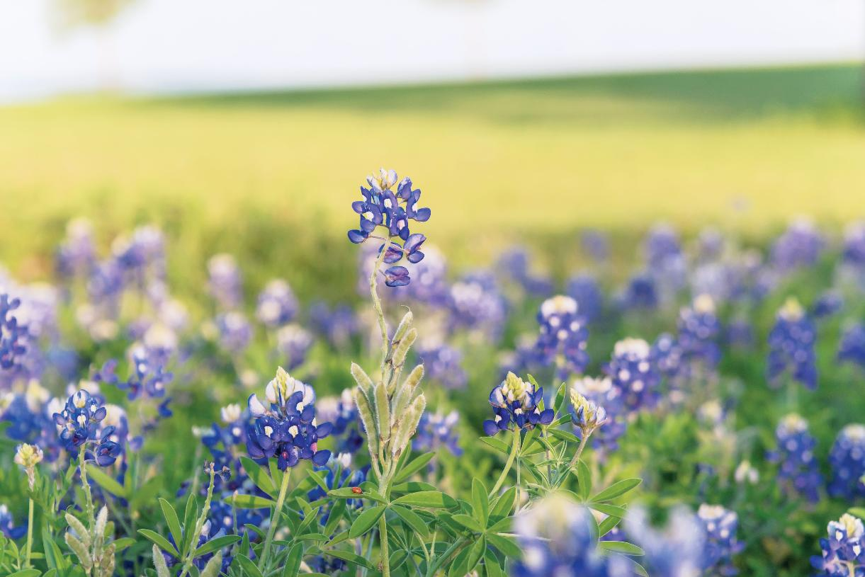 Hike or bike the nature trails that tie into existing Flower Mound trails