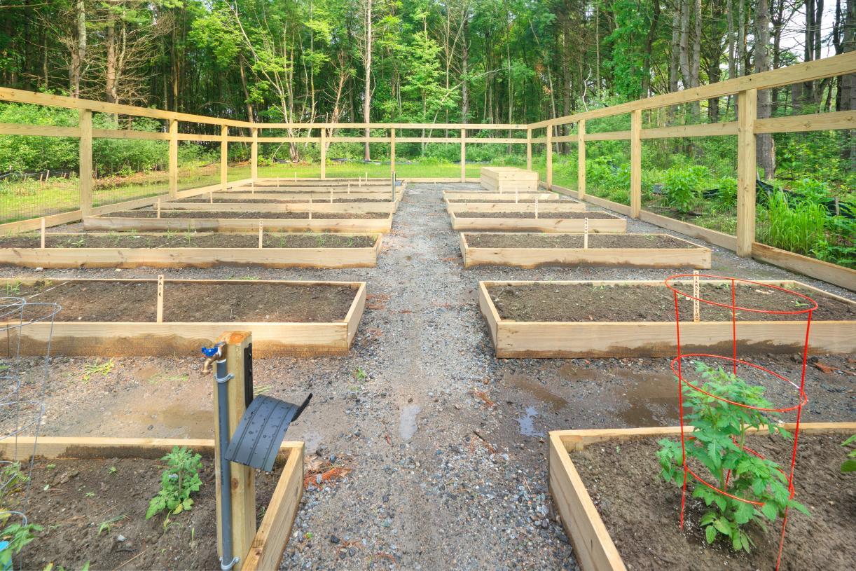 Grow fresh veggies in the community garden