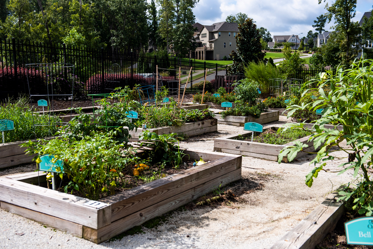 Exceptional community garden