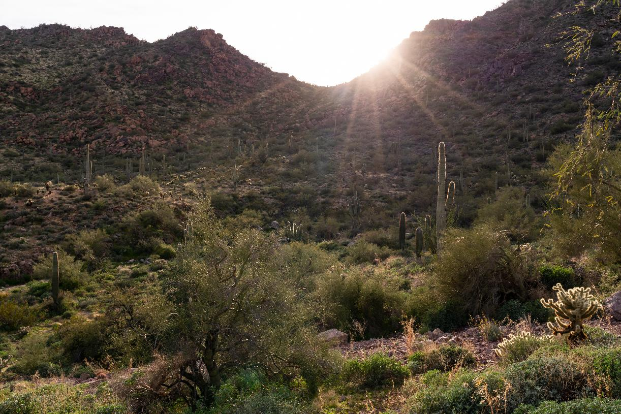 Serene Sonoran Desert setting with direct access to trail heads