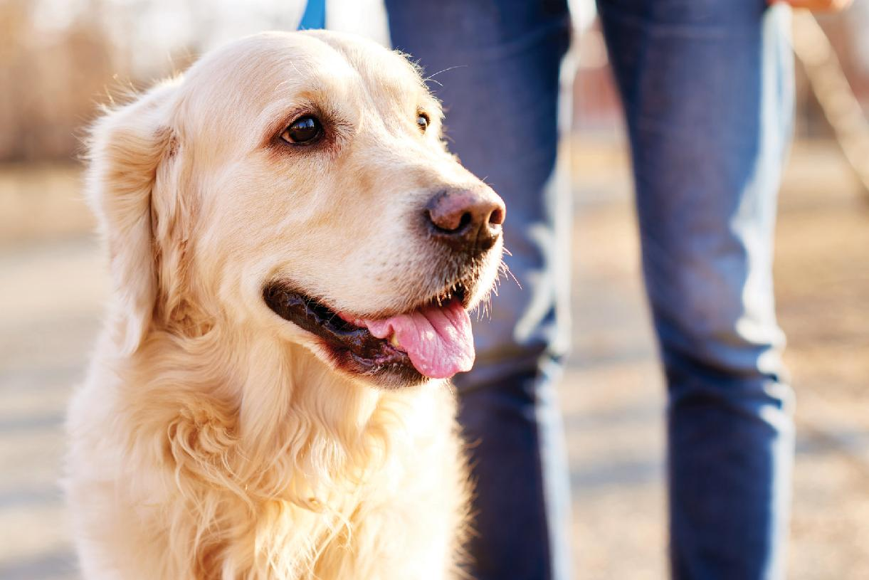 Meet up with other dog enthusiasts at Wiggly Field Dog Park