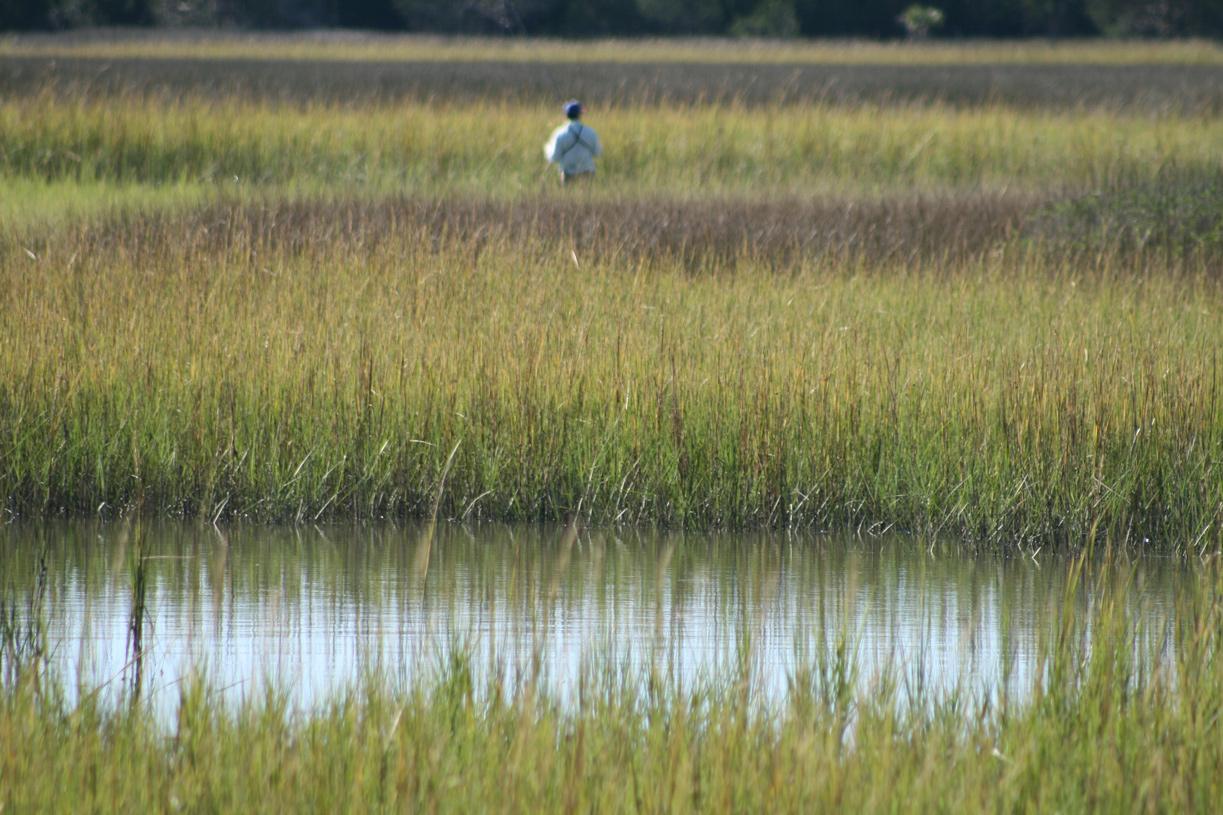 Explore the Nature that Surrounds Charleston