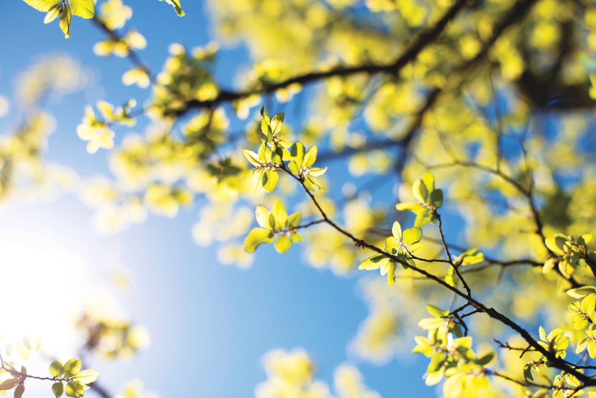 Stunning laurel oak trees surrounding the community