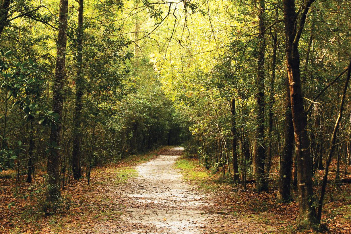 Nearby access to the Francis Marion National Forest