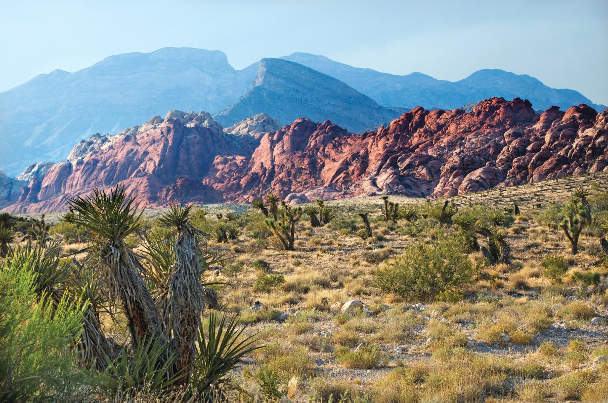 Hike or bike at nearby Red Rock Canyon