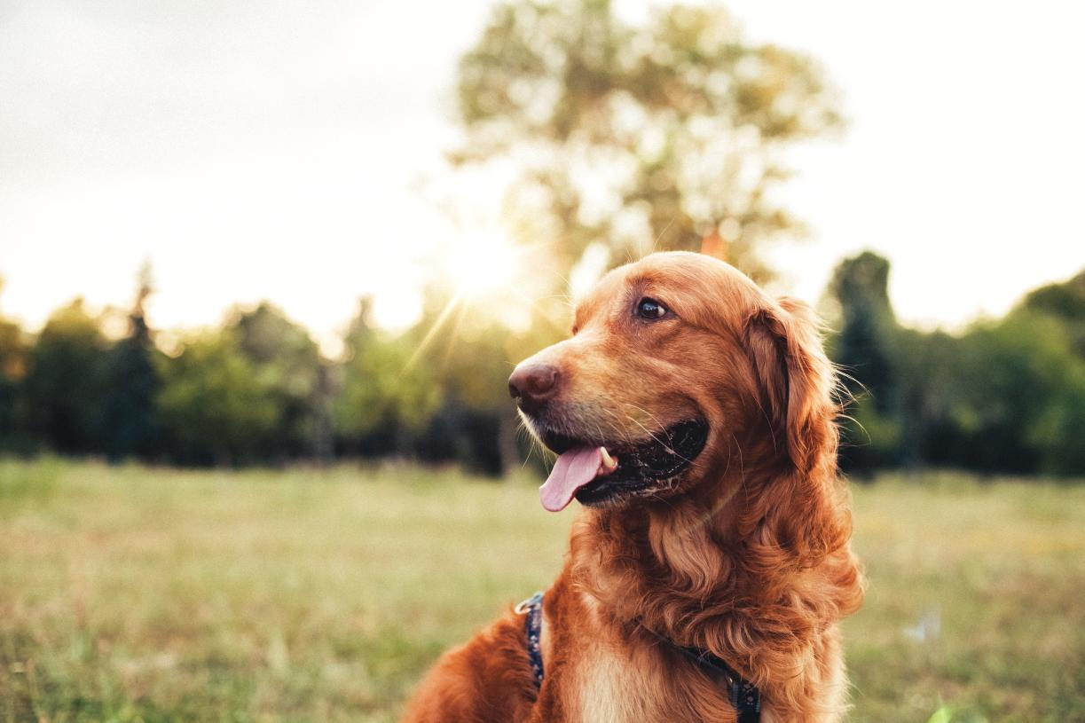 Your furry family members will love all that Ellicott City has to offer