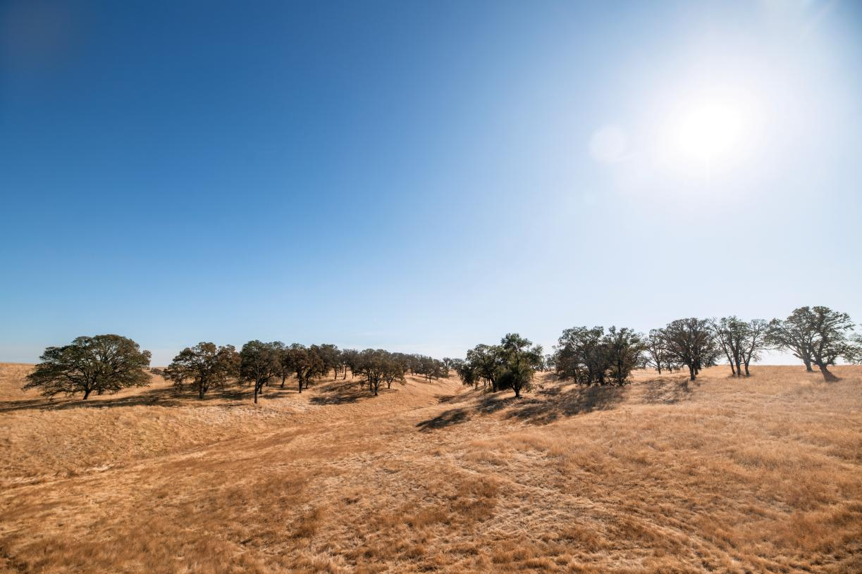 Regency at Folsom Ranch has acres of preserved open areas and native Heritage Oak trees