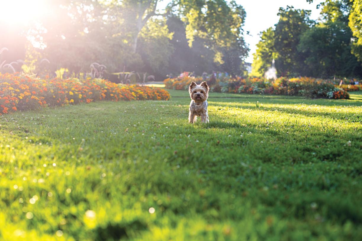 Historic Grant Park provides a scenic backdrop