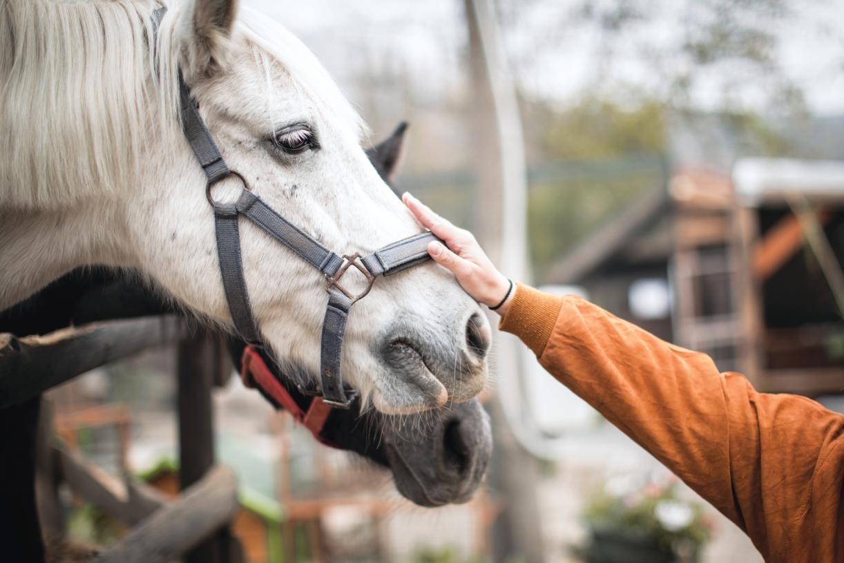 Desert International Horse Park