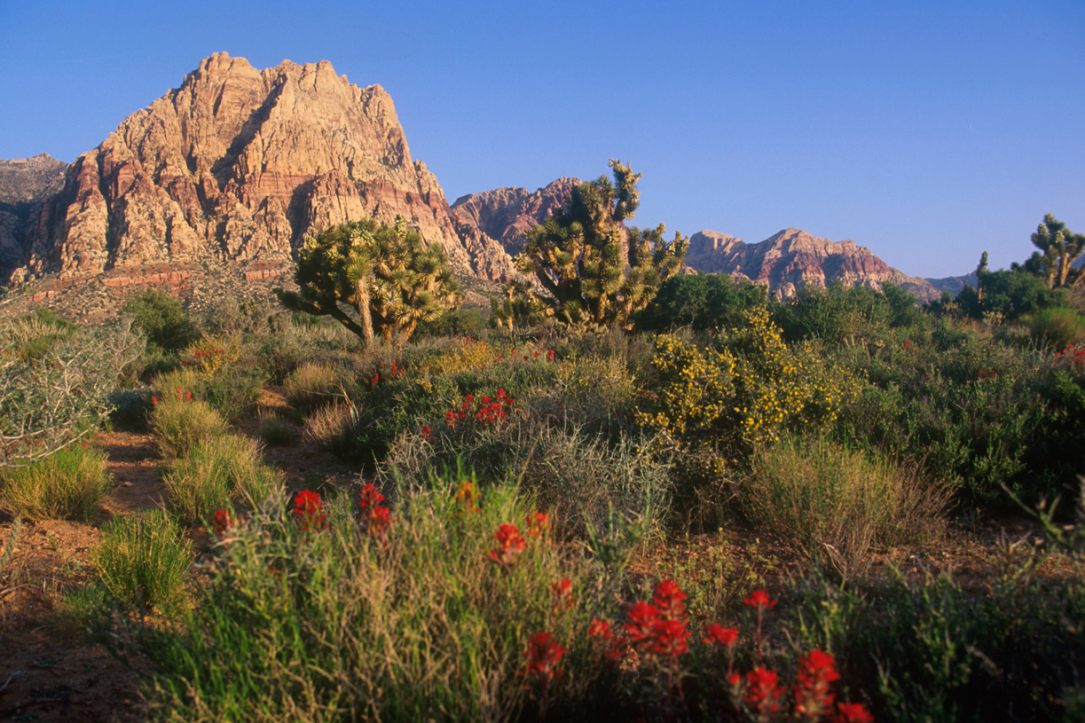 55 and over living in las vegas - Explore The Beauty Of The Red Rock Canyon National Conservation Area With Over 30 Miles Of Hiking Trails For The Novice To The Avid Hiker