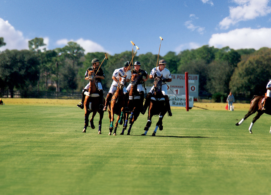 Watch exciting polo matches at the Sarasota Polo Club
