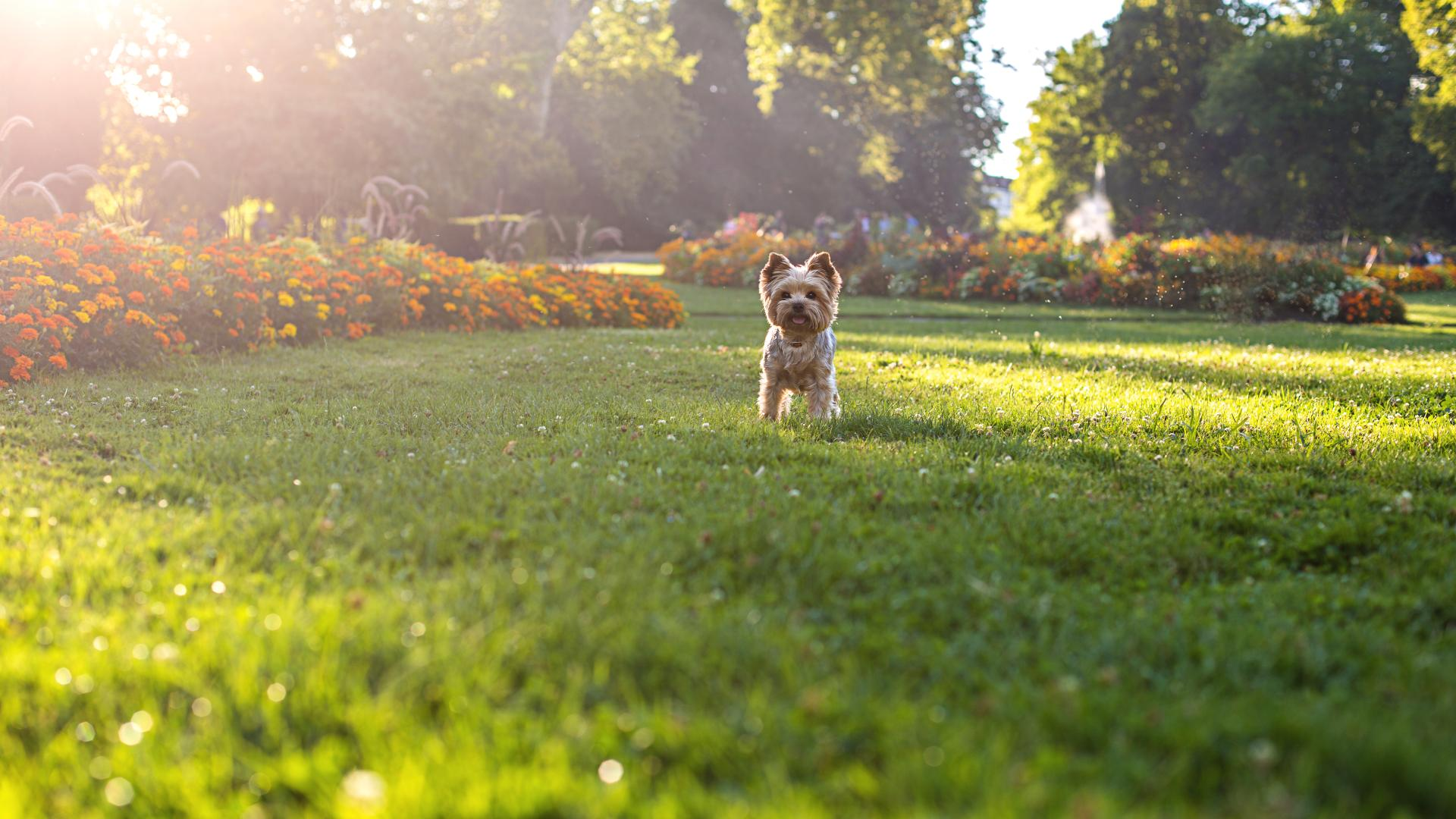 Your furry family members will love the open space at Metro Walk